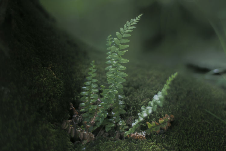 lush, emerald fern sprout growing on a tree trunk