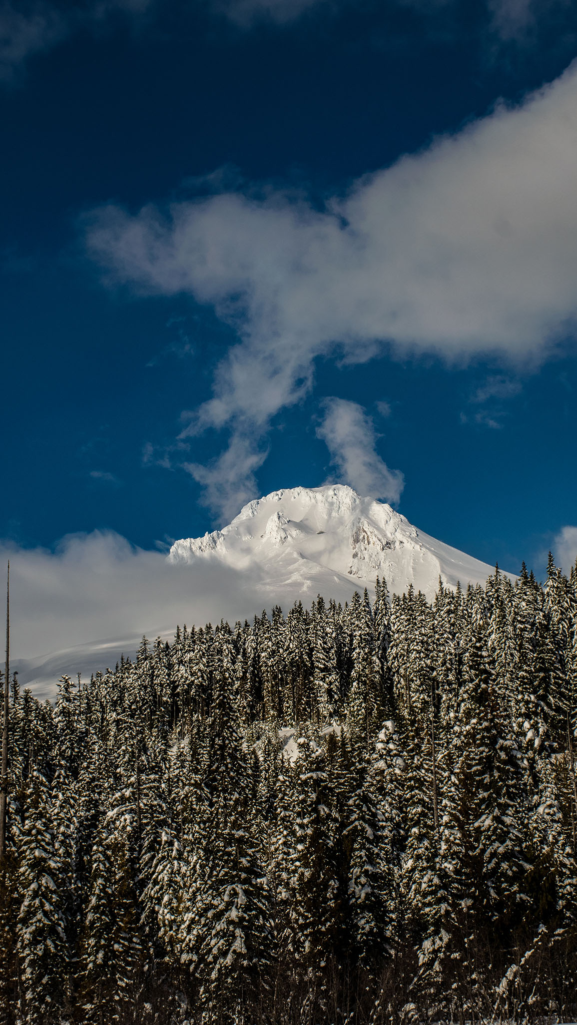 Wide angle shot of snow covered mount hood with pine trees below
