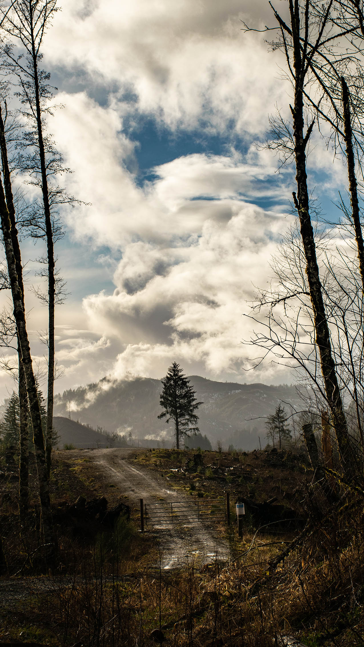 dynamic clouds grace the countryside over western Oregan in the Tillamook forest.