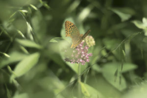 butterfly perched on a wildflower